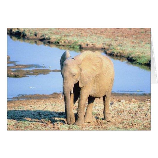 Elephant Africa Card