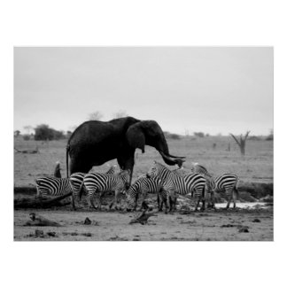 elephant and zebras poster from 14.95