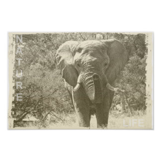 elephant animal pop art picture poster