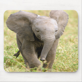 Elephant baby mouse pad