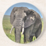 Elephant by Barb Craven_HDR Print.jpg Beverage Coasters