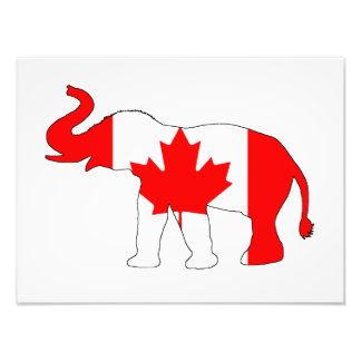 Elephant Canada Art Photo