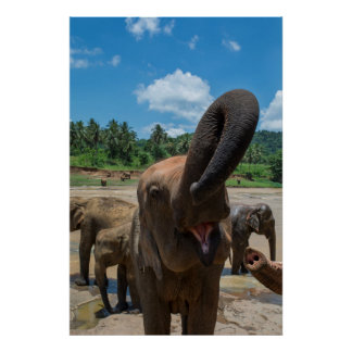 Elephant drinking water, Sri Lanka Poster