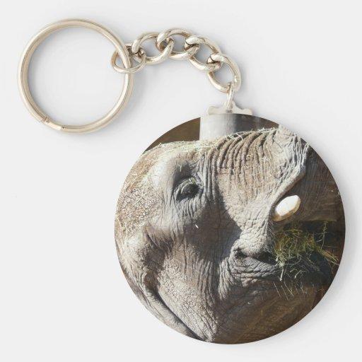 elephant eating keychain