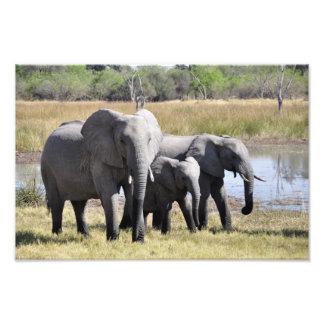 Elephant family photograph
