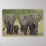 Elephant Family Plakate