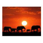 Elephant family post card