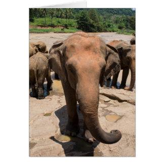 Elephant group portrait, Sri lanka Card