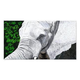Elephant II Photograph