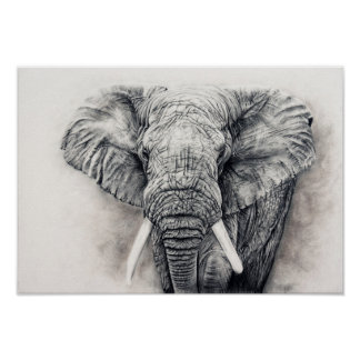 Elephant in charcoal poster