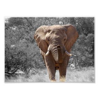 Elephant in Namibia Photo Print