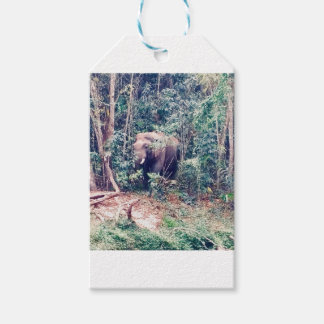 Elephant in Thailand Gift Tags