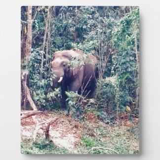 Elephant in Thailand Plaque