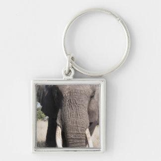 Elephant (Loxodonta africana), Abu Camp 3 Silver-Colored Square Key Ring