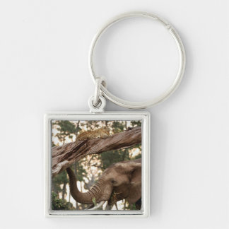 Elephant (Loxodonta) Testing Scent Of Leopard Silver-Colored Square Key Ring