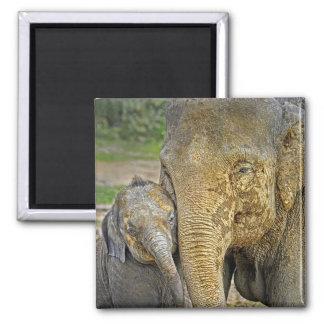 Elephant Newborn Hug Magnet