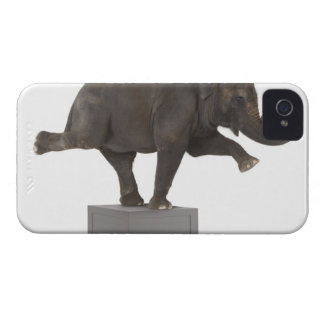Elephant performing trick on box Case-Mate iPhone 4 cases