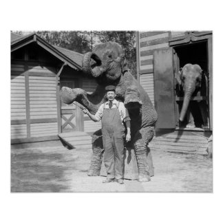 Elephant Performs a Trick, 1915 Poster