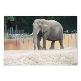 Elephant Photo Print