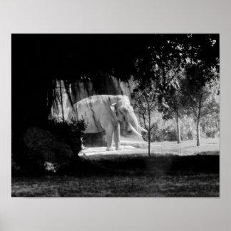 "Elephant Photo Print 14"" x 11"""