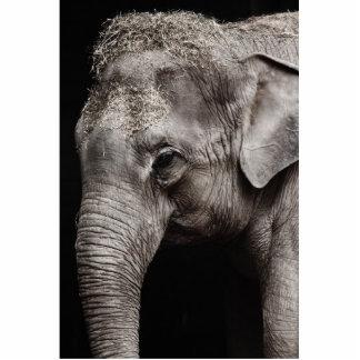 Elephant Photo Standing Photo Sculpture