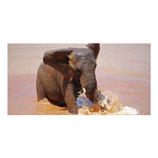 Elephant playing with water photo cards