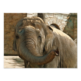 Elephant Pointing Forward with the Trunk Art Photo