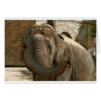 Elephant Pointing Forward with the Trunk Card