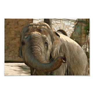 Elephant Pointing Forward with the Trunk Photographic Print