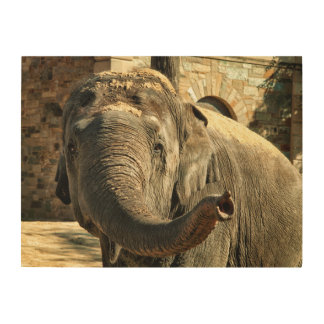 Elephant Pointing Forward with the Trunk Wood Print