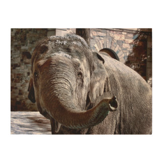 Elephant Pointing Forward with the Trunk Wood Wall Art