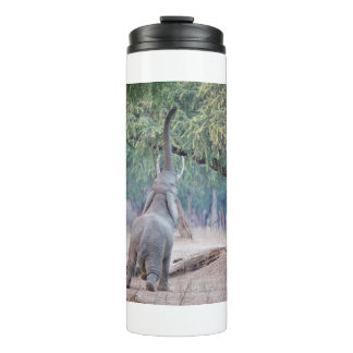 Elephant reaching for Acacia tree Thermal Tumbler