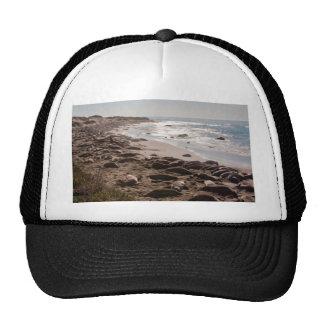 Elephant Seal Hat