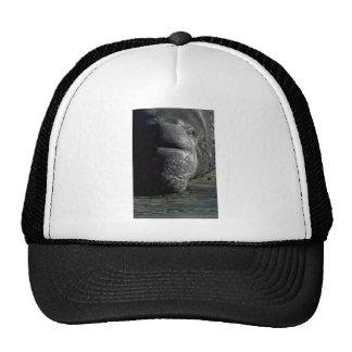 Elephant Seal Head, Frontal Trucker Hats