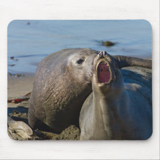 Elephant Seal Matting Mouse Pad