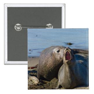 Elephant Seal Matting Pins