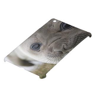 Elephant seal Mirounga leonina) cub in the iPad Mini Cover