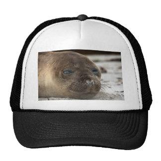 Elephant Seal pup Cap