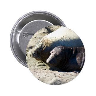 Elephant Seals Button