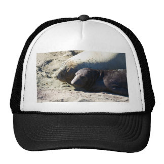 Elephant Seals Trucker Hat