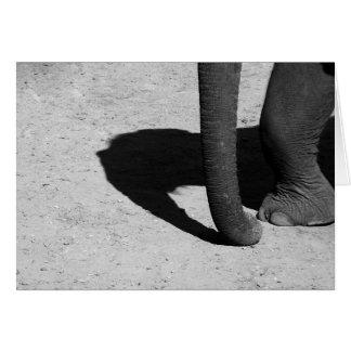 Elephant Shadow Card