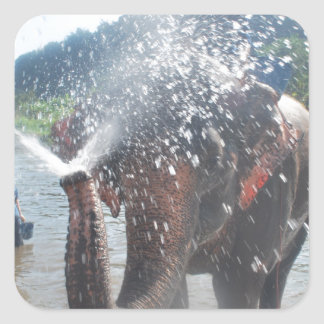 Elephant spraying water square sticker