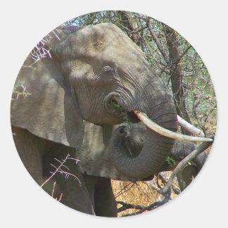 Elephant Stickers Round Sticker