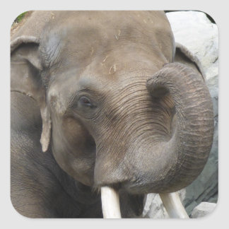 Elephant Trunk Stickers