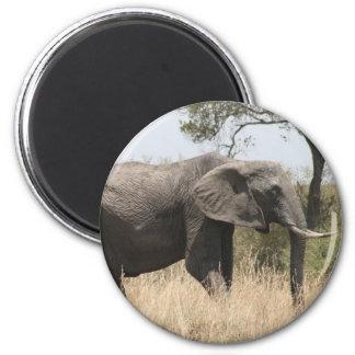 elephant tusk 6 cm round magnet