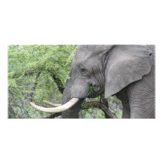 Elephant Tusks Personalized Photo Card