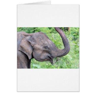 Elephant, Udawalawe, Sri Lanka Card