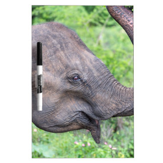 Elephant, Udawalawe, Sri Lanka Dry Erase Board