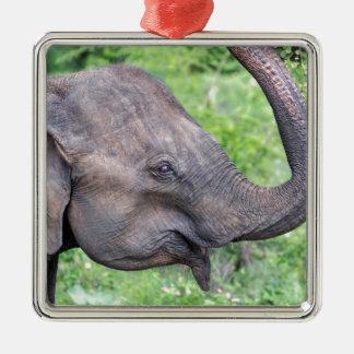 Elephant, Udawalawe, Sri Lanka Silver-Colored Square Decoration
