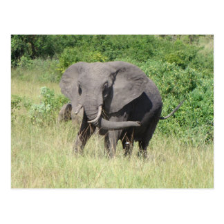 Elephant Uganda Africa Postcard